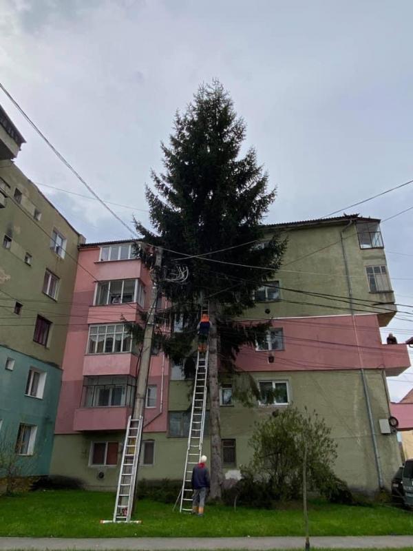 A magas fák kivágása igencsak szükségszerű volt